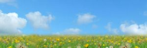 background image of a sunny blue sky and flowers