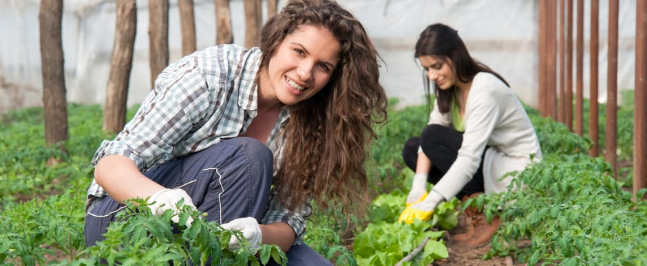 Women in a greenhouse planting